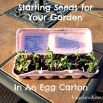 Starting Seeds In An Egg Carton! The Kids And I Worked On A DIY Garden Project Together!