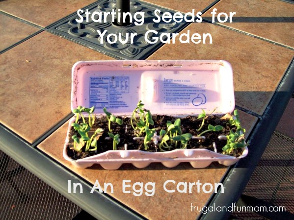 Starting Seeds in an Egg Carton for Gardening