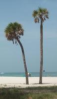 Beach177-9-20081