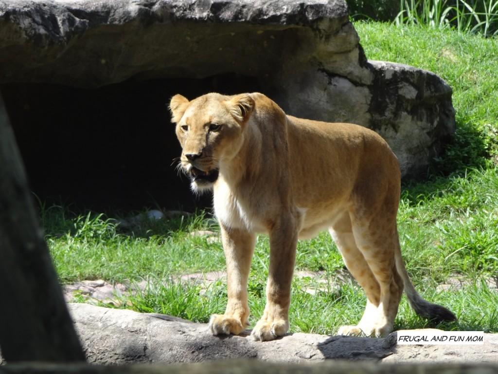 Animals at Busch Gardens
