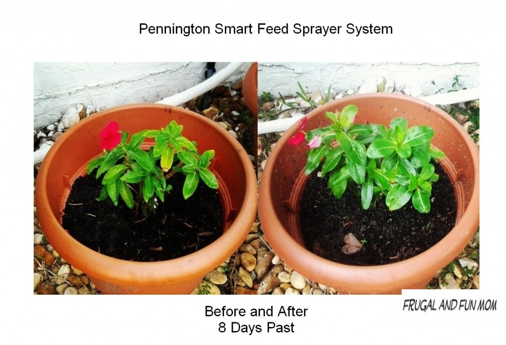 Before and After Pennington Smart Feed System