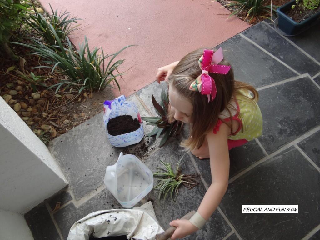 Milk Jugs into Flower pots planting