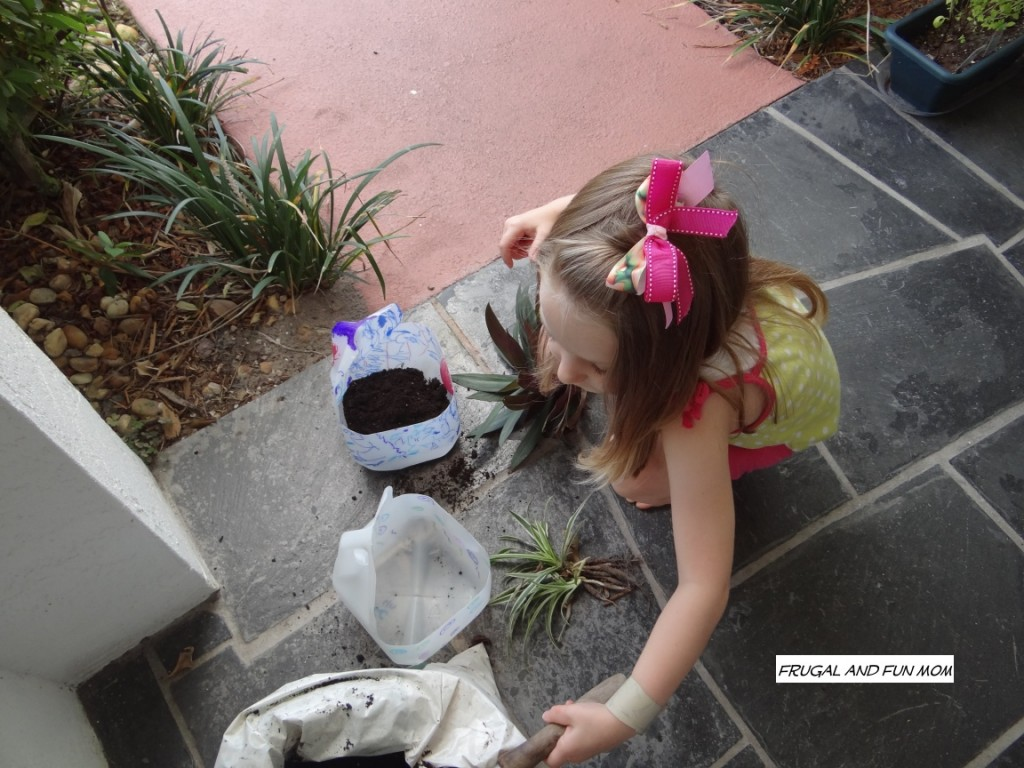 Milk Jugs into Flower pots planting