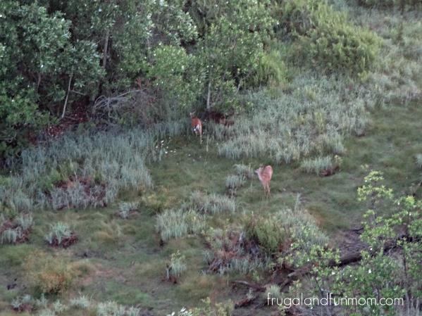 Aerial views of deer from a Hot Air Balloon Ride