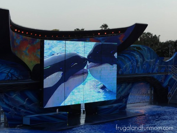 Trip-To-SeaWorld-Orlando-20