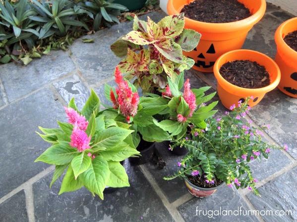 Jack O'Lantern Flower Pots 6