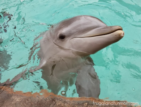 Feeding-the-Dolpins-at-SeaWorld-Orlando