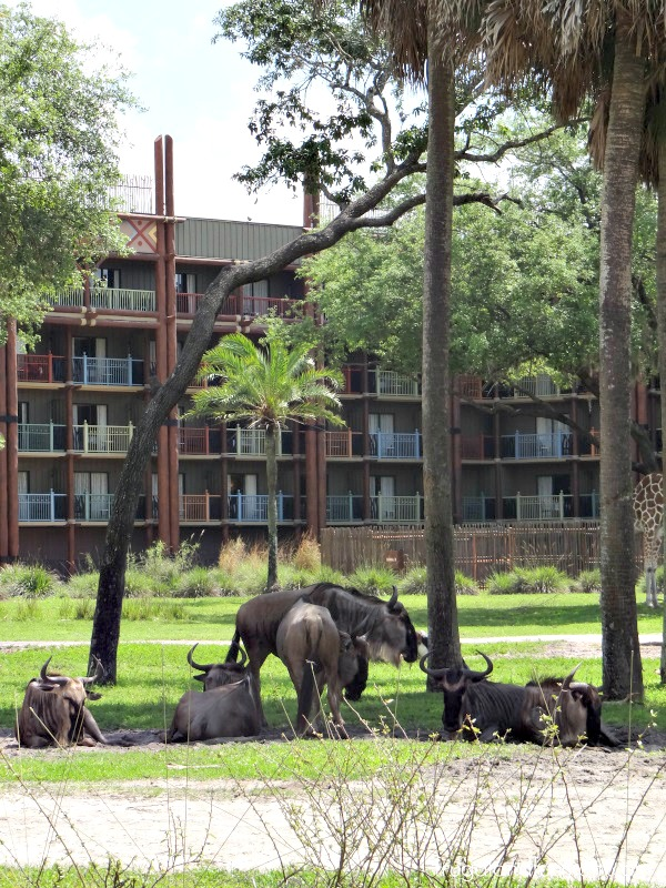 Animal Kingdom Lodge Resort