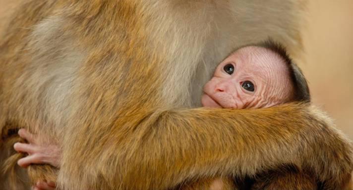Monkey Kingdom 1