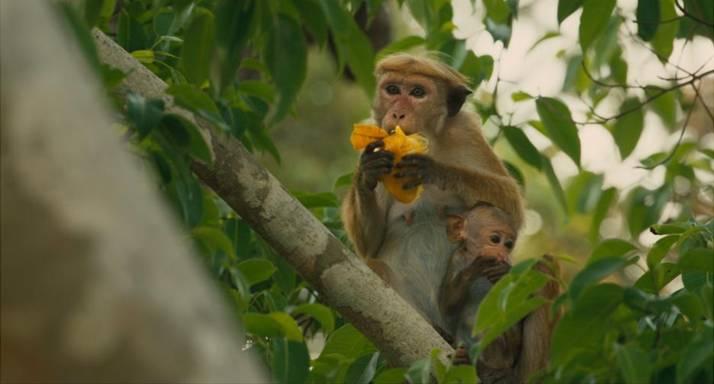 Monkey Kingdom 3