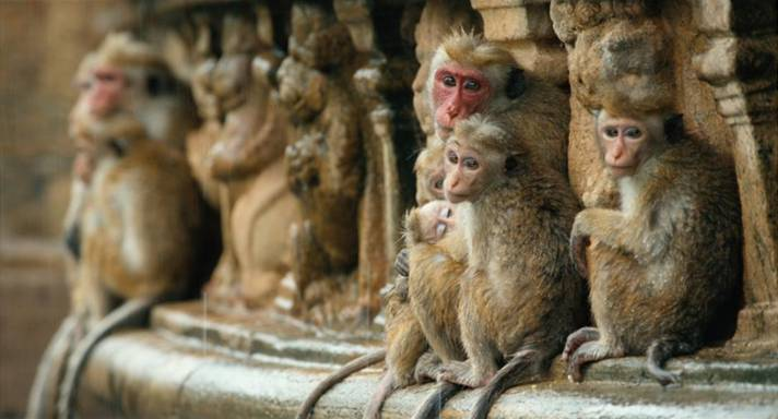 Monkey Kingdom 4