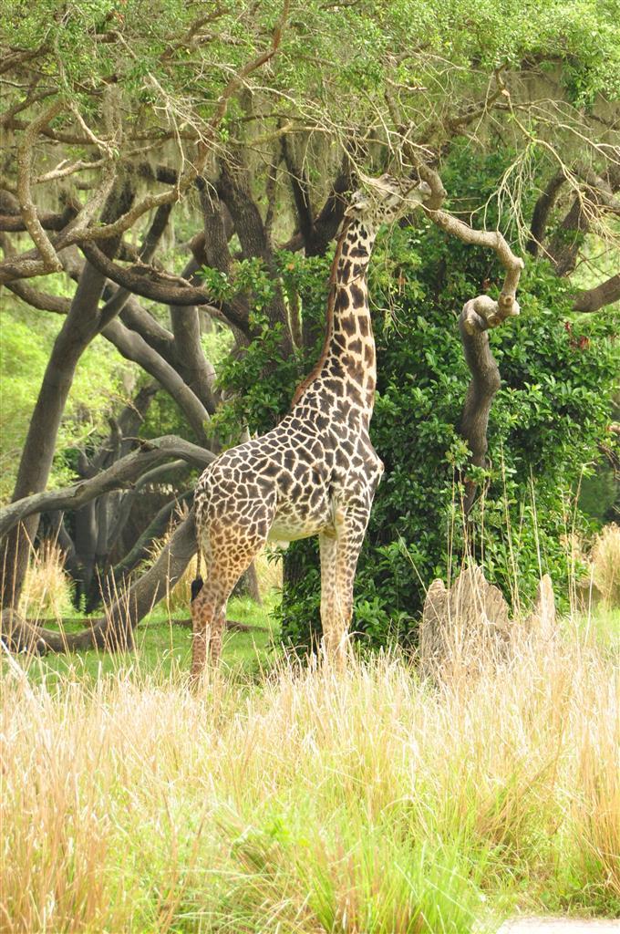 Wild-Africa-Trek-113-Copy-Copy
