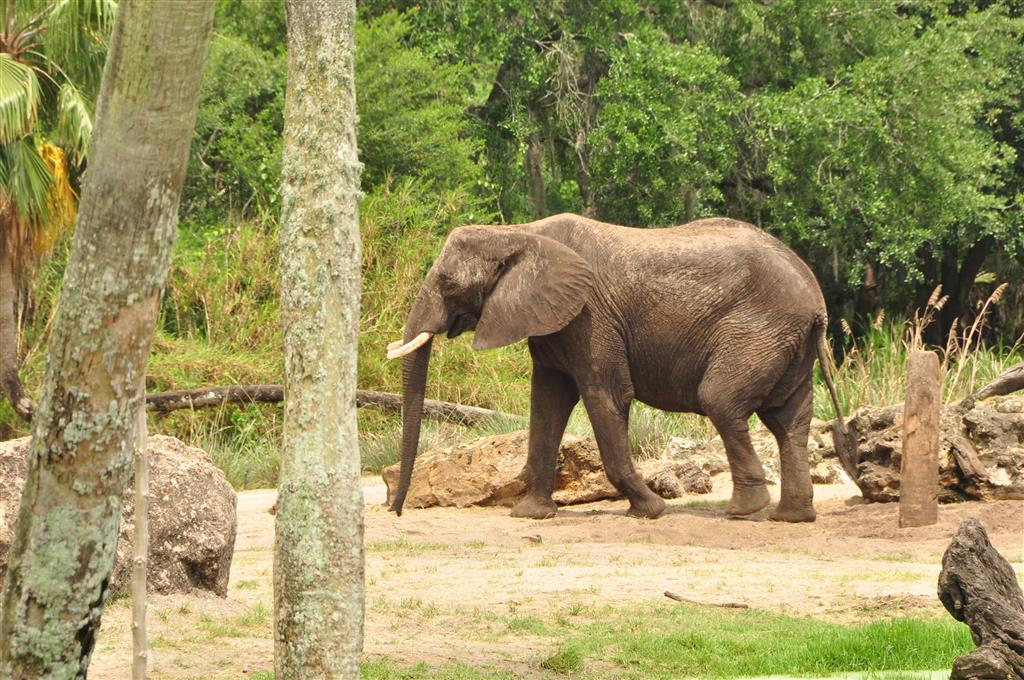 Wild-Africa-Trek-126