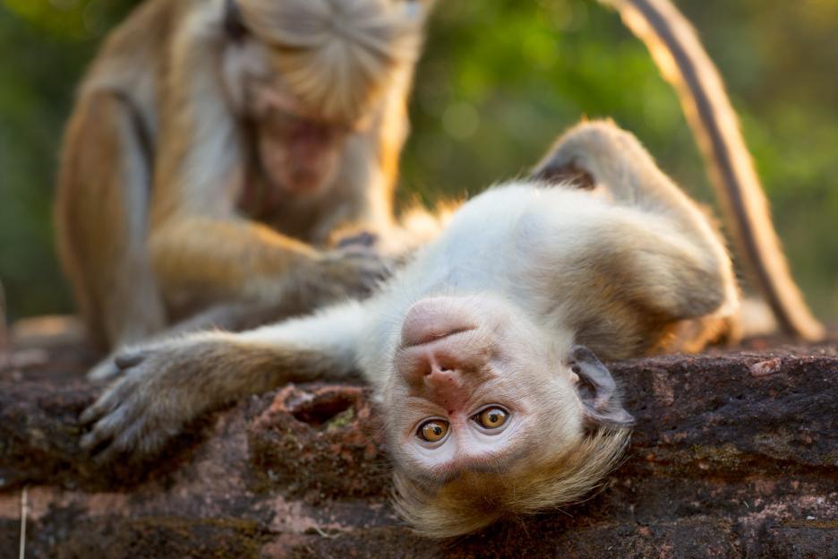 monkey kingdom cute monkey