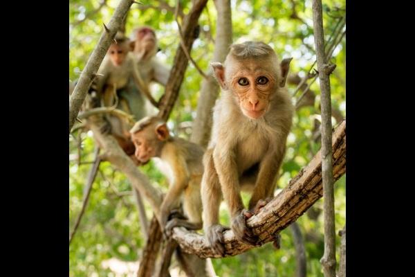 monkey kingdom photo