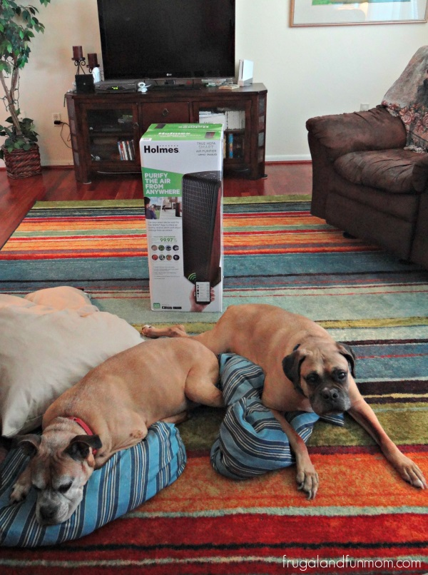 Dogs and Holmes Air Purifier