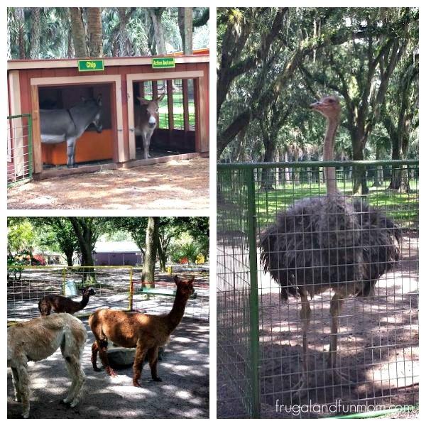 Animals at Green Meadows Petting Farm