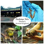 Backstage Tales Tour at Disney's Animal Kingdom! #MonkeyKingdomEvent
