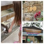Visiting the Barnyard Buddies Children's Zoo at the Central Florida Zoo & Botanical Gardens!