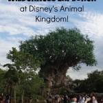 Disney's Animal Kingdom Wilderness Explorers!