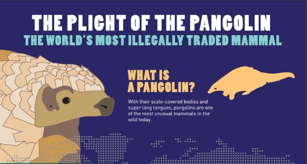 Information about the Pangolin