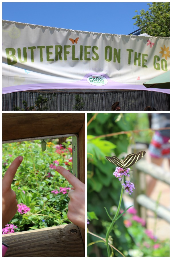 Butterflies on the Go at EPCOT International Flower and Garden Festival