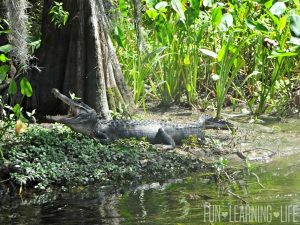 10 Gorgeous Photos From A River Boat Ride At Wakulla Springs Located in North Florida!