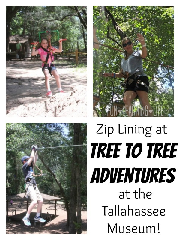 Zip Lining at the Tallahassee Museum at Tree To Tree Adventures