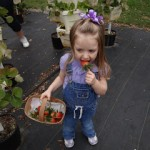 Strawberry Picking at Eden Farms!