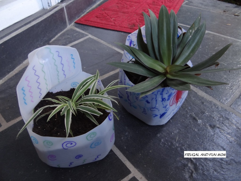 Milk Jugs into Flower pots plants in