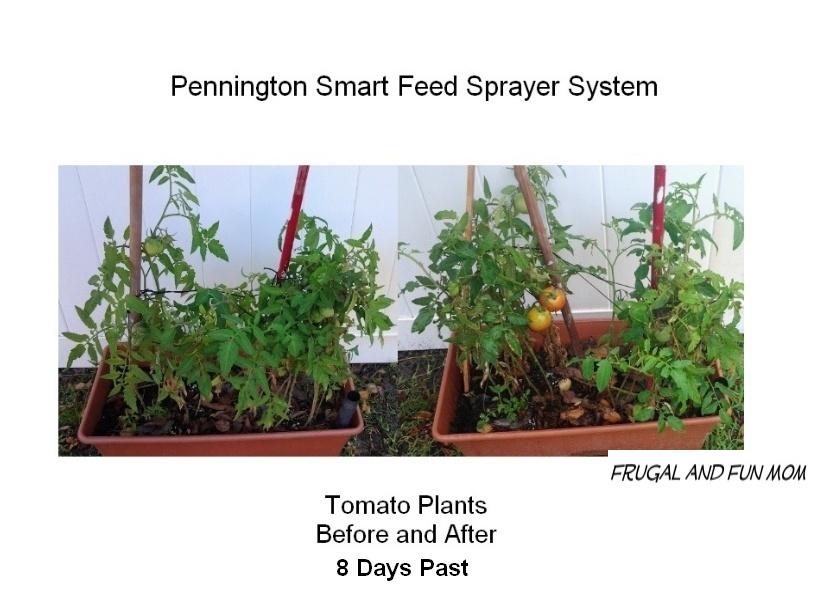 Pennington Smart Feed Sprayer System Tomatoes