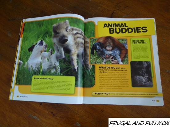 Nat Geo Everything Pets Animal Buddies
