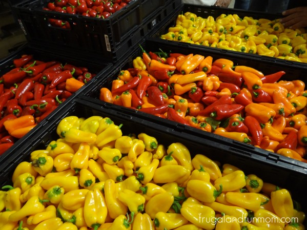 Bellafina-Peppers-inthe-packing-house-at-Bailey-Farms