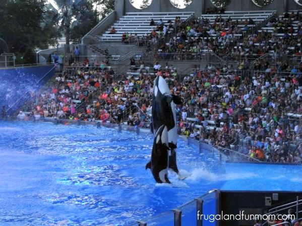 Trip-To-SeaWorld-Orlando-21