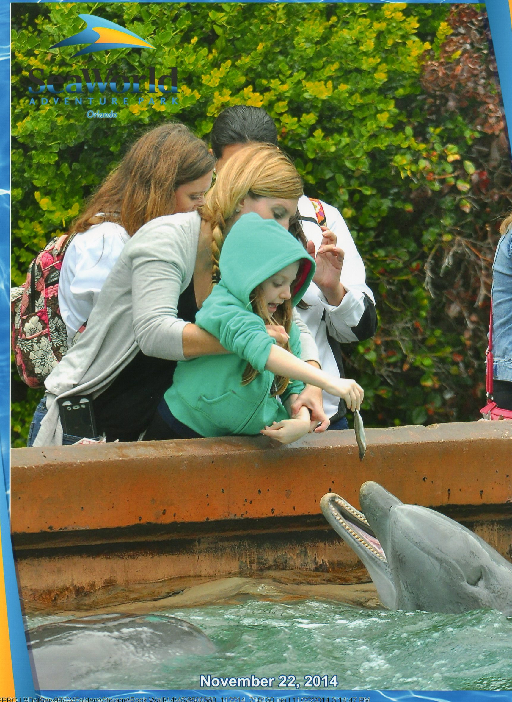 Feeding-the-Dolphins-at-SeaWorld