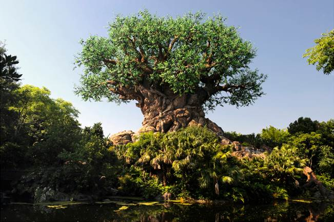 Animal Kingdom at Walt Disney World