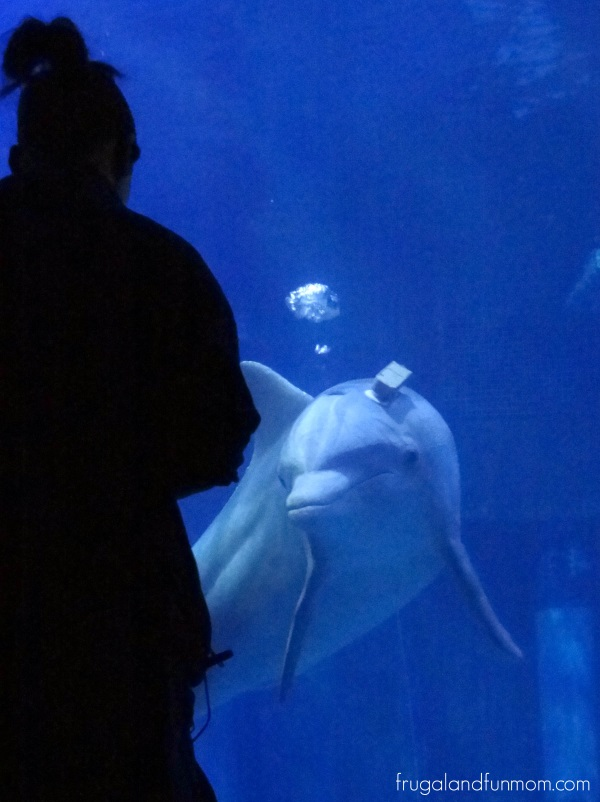 Dolphin Research EPCOT