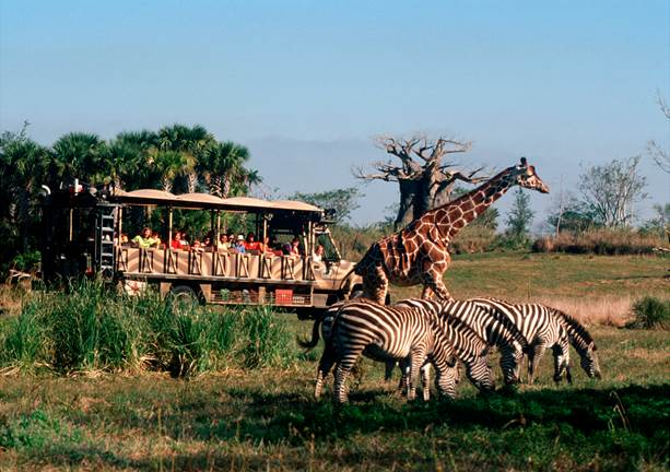 Safari at Animal Kingdom at Walt Disney World