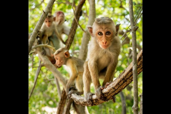 monkey kingdom photo