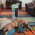 The Holmes® Smart Air Purifier with WeMo Helps Me Reduce the Dog Smell!