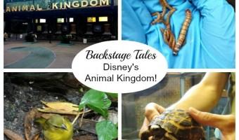 Backstage Tales Tour at Disney's Animal Kingdom!