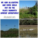 Taking A Ride At Black Hammock Airboat Adventures!