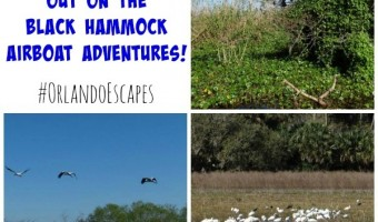 Taking A Ride At Black Hammock Airboat Adventures! #OrlandoEscapes