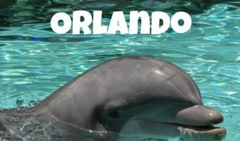 SeaWorld Orlando: Things To Do At This Florida Theme Park!