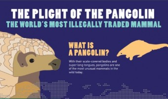 What Does A Pangolin Look Like? Meet This Endangered Species and Read Its Story!