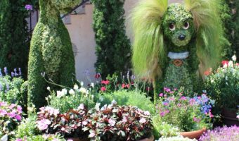 Beautiful Photos from the 2016 EPCOT International Flower & Garden Festival!