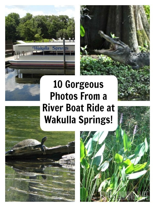 Photos From A River Boat Ride At Wakulla Springs!