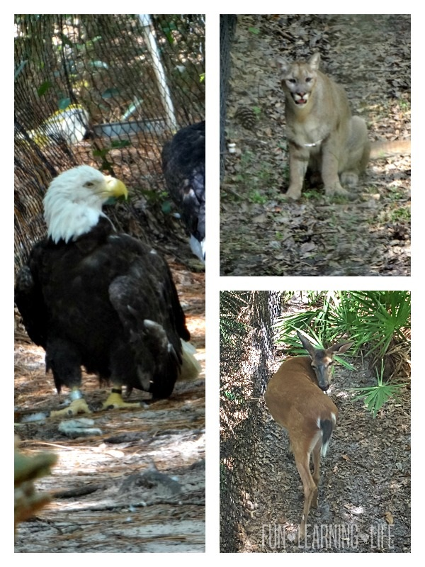 Wildlife at the Tallahassee Museum