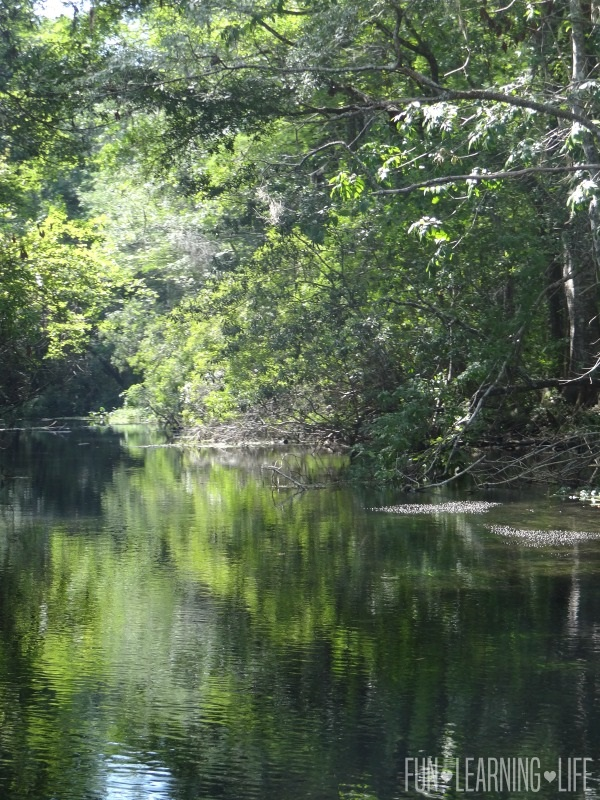 waterway at River Boat Ride At Wakulla Springs