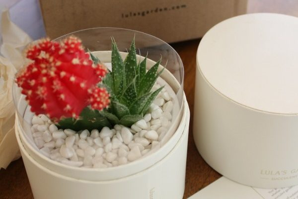 Lula's Garden, a Succulent Garden Gifting Company! {Giveaway}